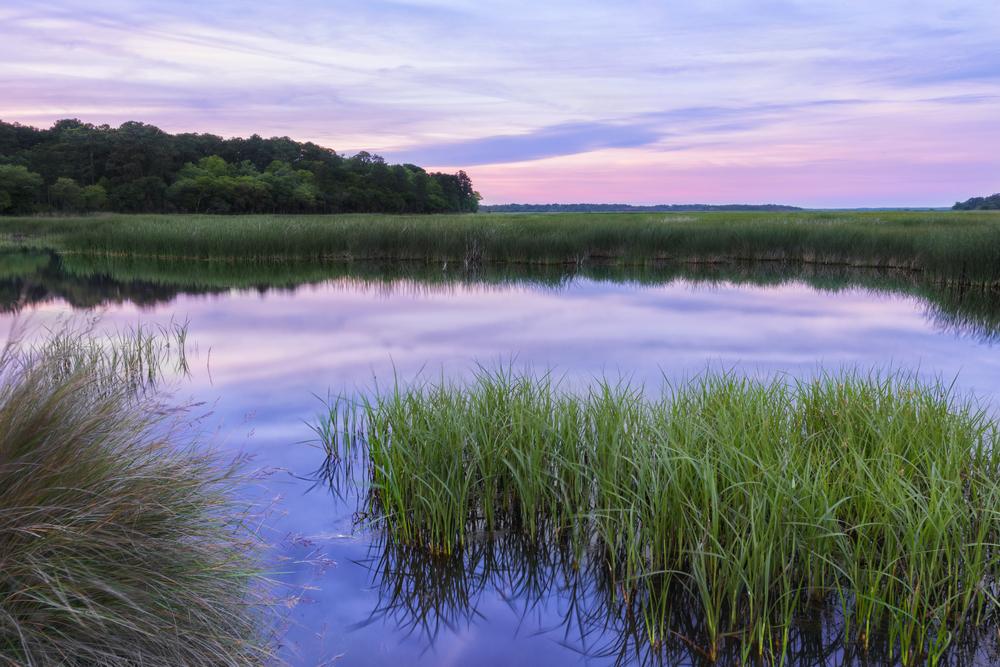 ACE Basin Land Conservation