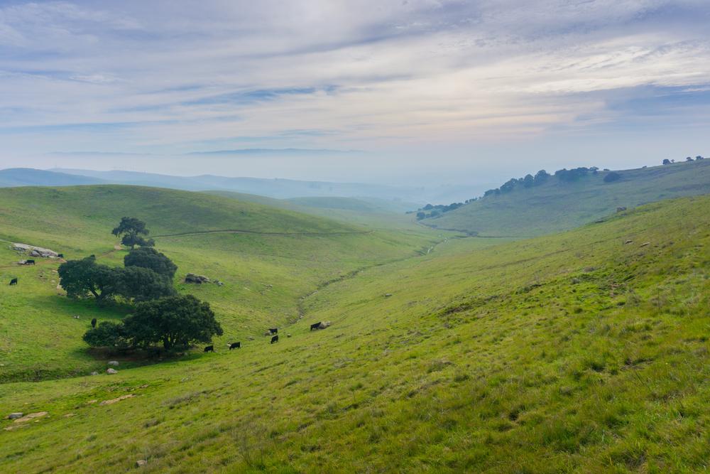 Livermore Valley, California