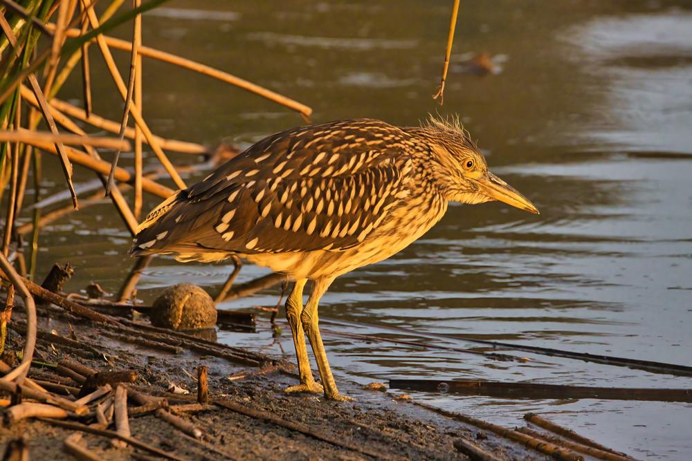 Andree Clark Bird Refuge