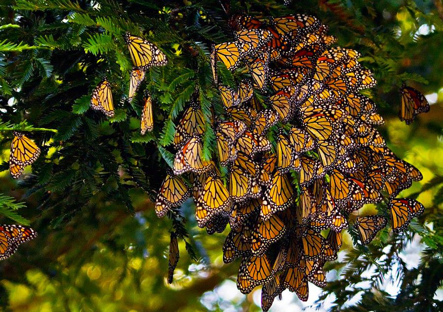 Coronado Butterfly Reserve