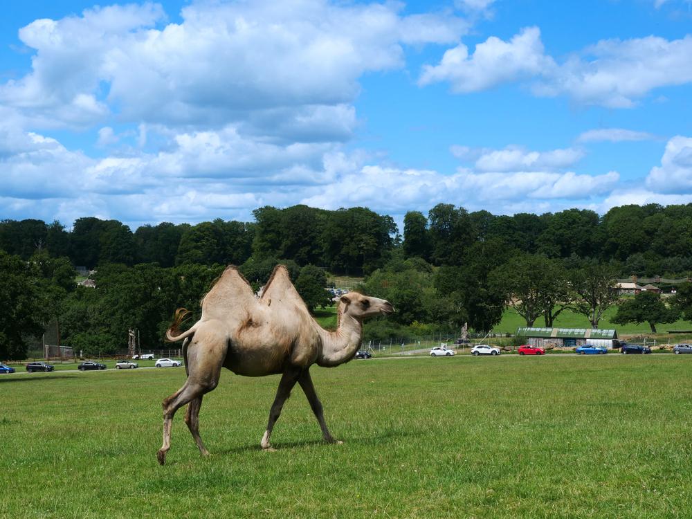 Longleat Safari and Adventure Park