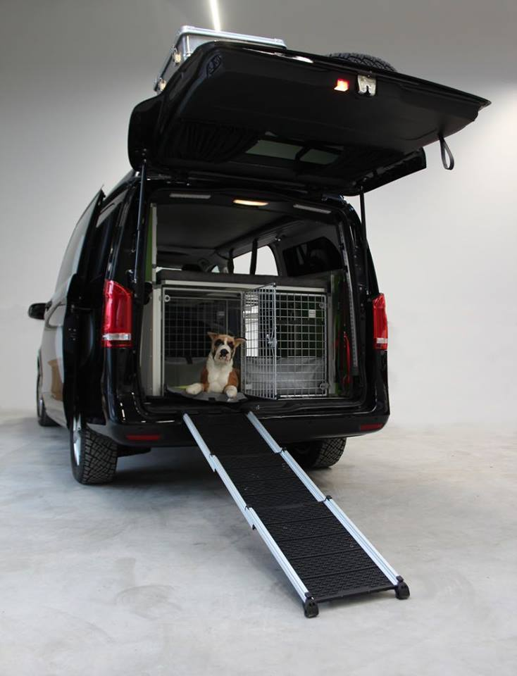 Dogscamper
